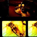 ペットフォトムービー (スライドショー)ドリーミー02