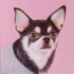 色鉛筆画犬アップ