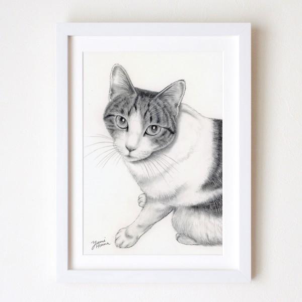 ペット肖像画デッサン猫yumi