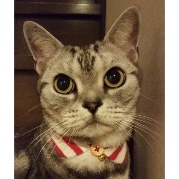 水彩画フラワー猫元写真