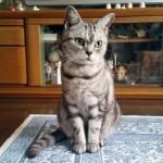 猫肖像画 kiA_写真_猫